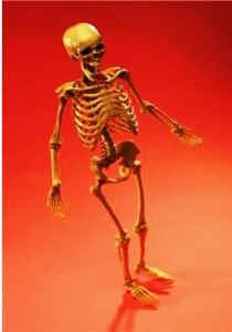 Picture of a skeleton