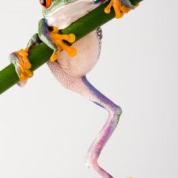 frog feeling anxiety