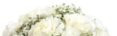 white carnations for Mother's Day